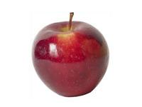 sadnice-voca-gloster-jabuka
