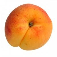 voćne-sadnice-kajsija-roksana